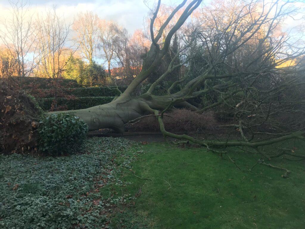Verwijderen van omgevallen boom na storm
